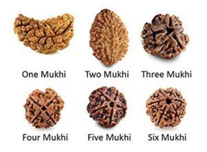 jitubhai , rudraksha, rudraksha mala, astrology